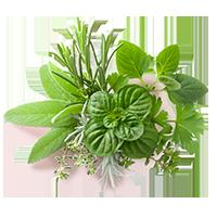 Bouquet d'herbes